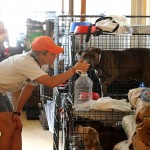 Lessons Learned from Hurricane Katrina – Pet Safety